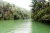 Loboc River in the island of Bohol